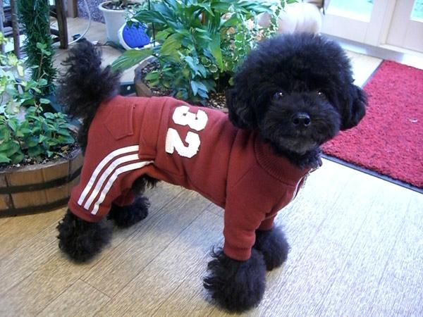 トリミングサロン mam's dog|川口市|ペットサロン、トリミング