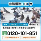 石狩市の害鳥駆除110番では無料お見積りを行っております。害鳥駆除でお悩みの方は、まずはご相談ください。