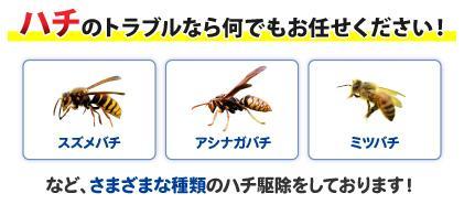ハチのトラブルなら何でもお任せください!