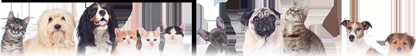 飽海郡遊佐町のペットのお葬式にまつわる【ペット葬儀・ペット供養・ペット出張火葬・犬・猫の葬儀】の事ならペット葬儀.comにおまかせください