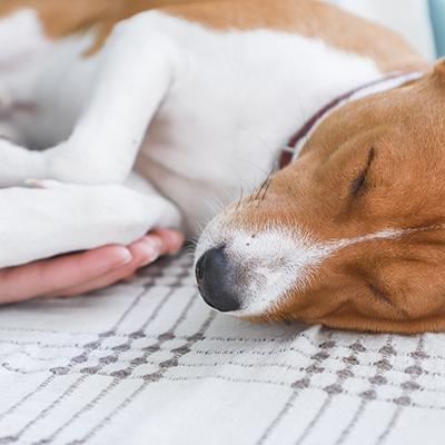 ペットの散骨、粉骨にも対応可能